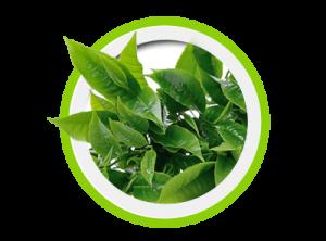 Keto Slim Fit - Tè Verde
